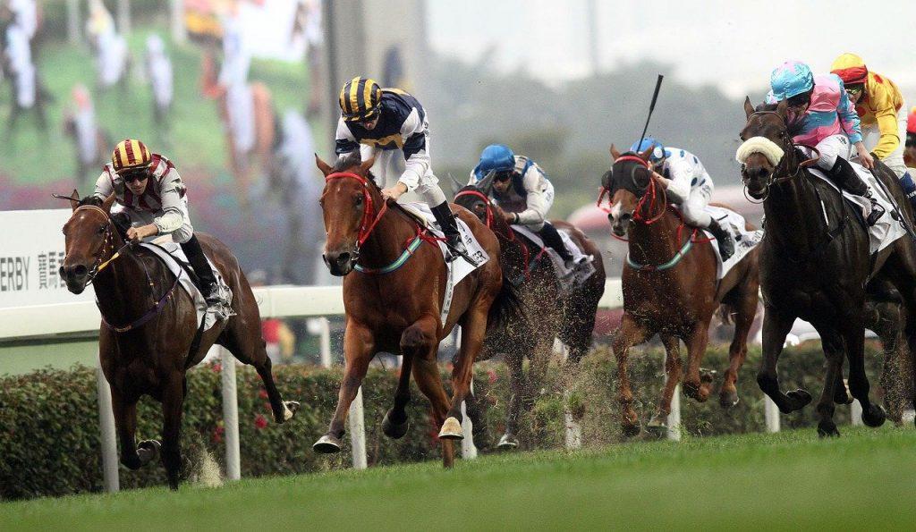 competition, horse, jockey
